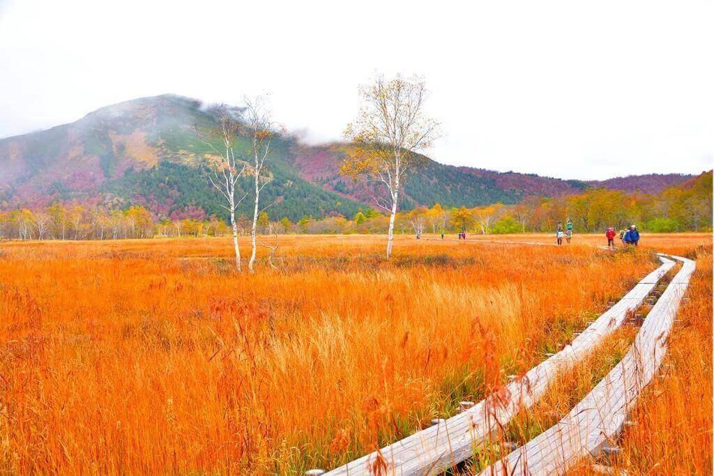 Autumn in Oze highland, Gunma Prefecture, Japan = Adobe Stock