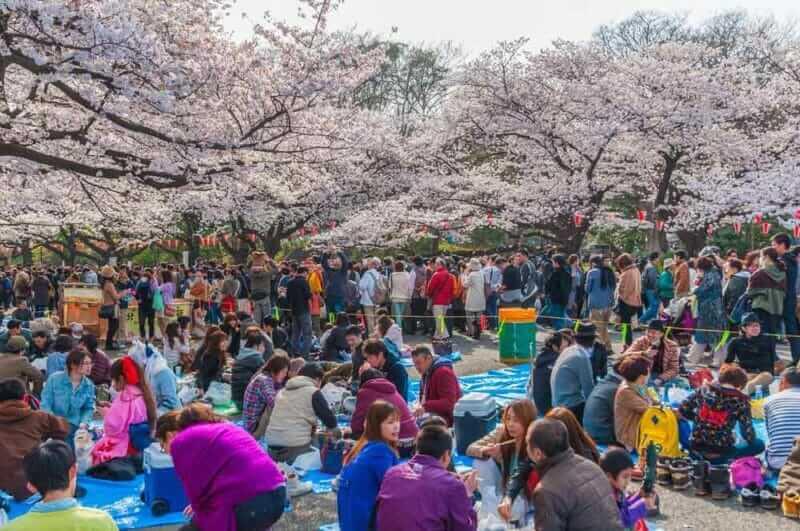 Tokyo Crowd enjoying Cherry blossoms festival in Ueno Park