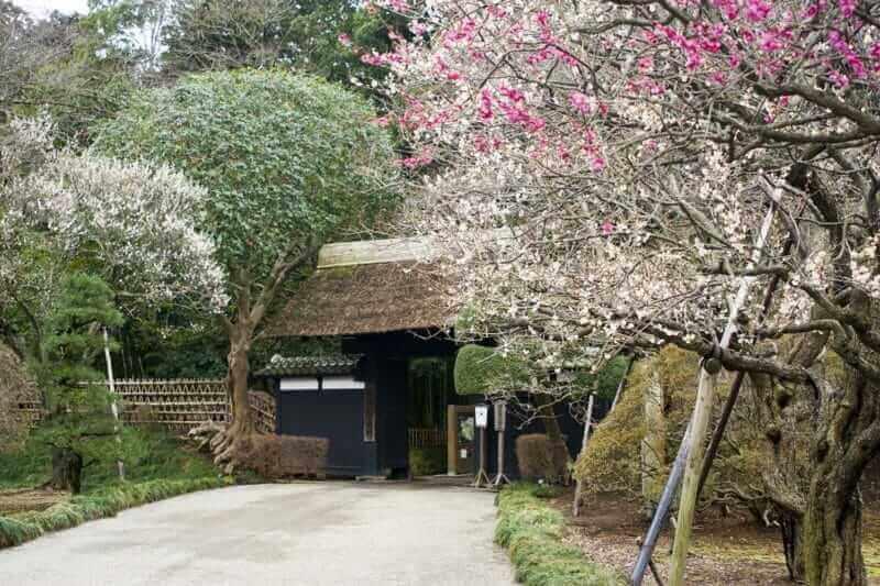 Kairakuen in early spring = Adobestock