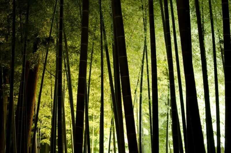 Bamboo stands producing deep shadows = AdobeStock