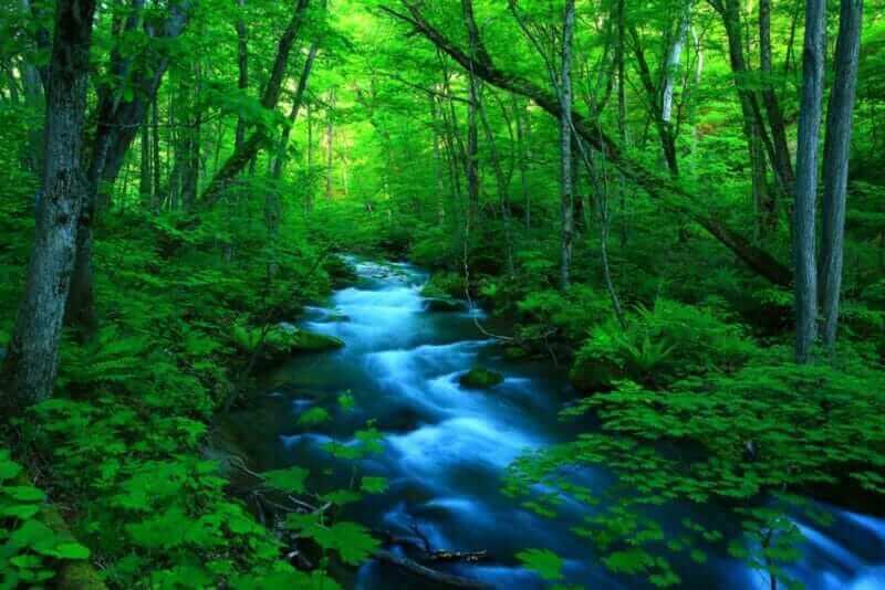 Oirase stream of fresh green = shutterstock