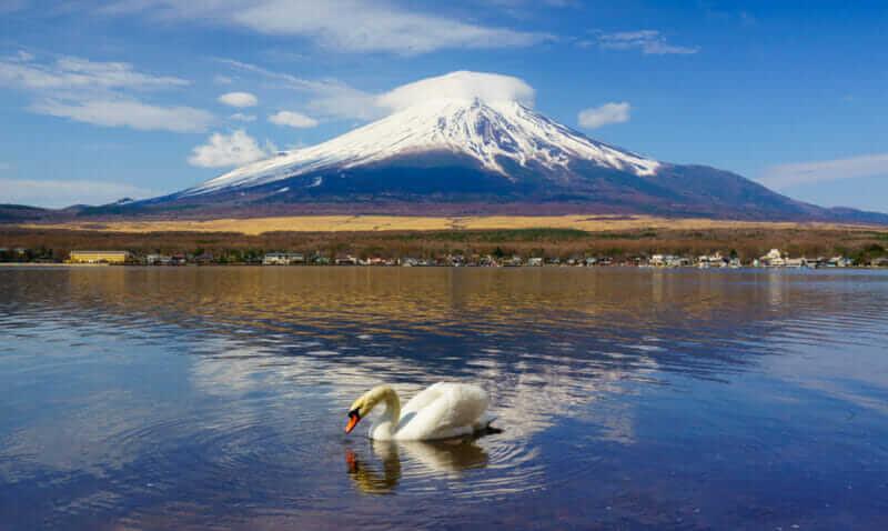 White Swan with Mount Fuji at Yamanaka lake, Yamanashi, Japan = shutterstock