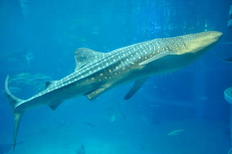 Whale Aquarium Kaiyukan, Osaka, Jpan = shutterstock
