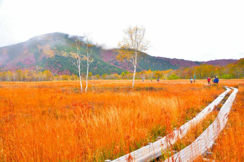 Oze national park in autumn,Japan = shutterstock