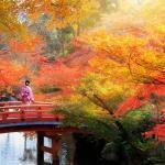 Wooden bridge in the autumn park, Japan autumn season, Kyoto Japan = Shutterstock