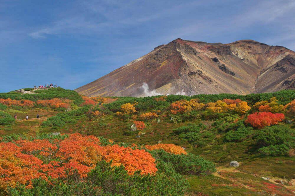 جاپان کے شہر شوکائڈو کے ڈائسسزان پہاڑ پر موسم خزاں کے پودے