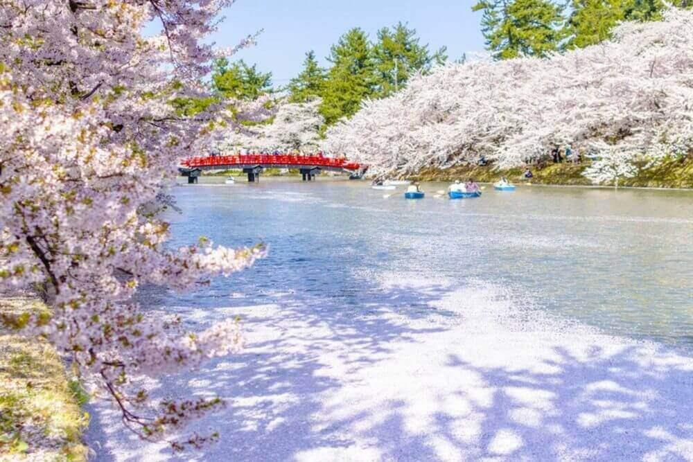 Cherry blossoms at the Hirosaki Castle Park in Hirosaki, Aomori, Japan = Shutterstock
