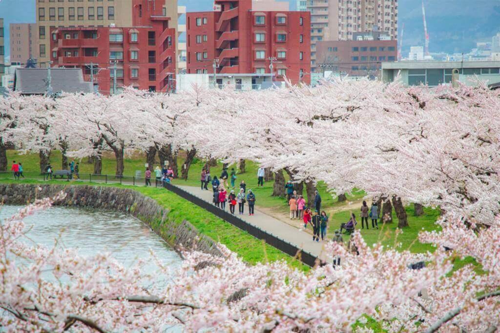 In late April, tourists walking in Goryokaku Park, watching beautiful cherry blossoms, Hakodate, Hokkaido = Shutterstock