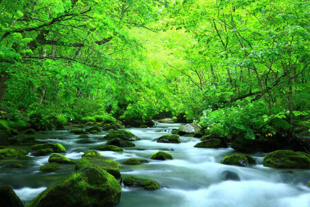Dòng suối Oirase vào mùa hè, tỉnh Aomori, Nhật Bản Shutterstock