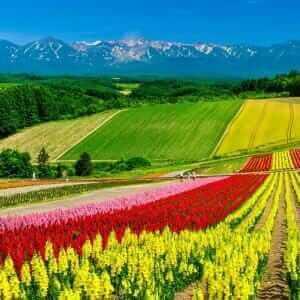Panoramic colorful flower field and blue sky in Shikisai-no-oka, Biei, Hokkaido, Japan = Shutterstock