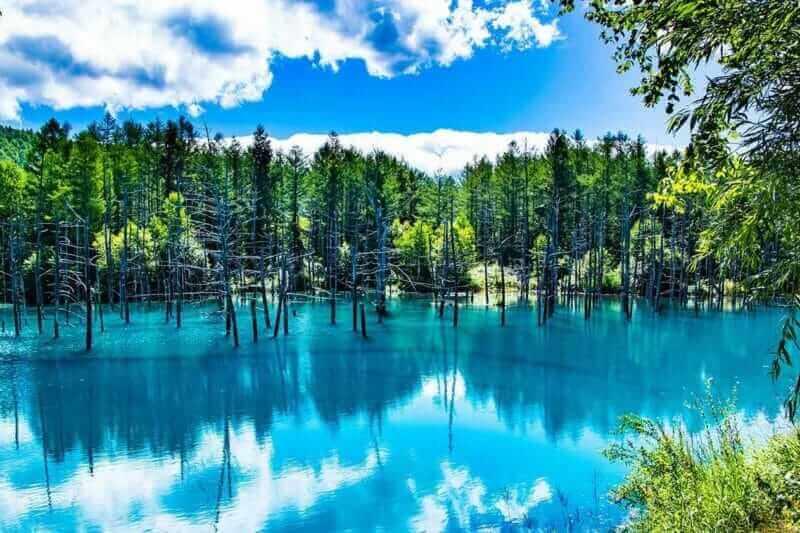 Relaxing in Hokkaido and Honshu Plateau