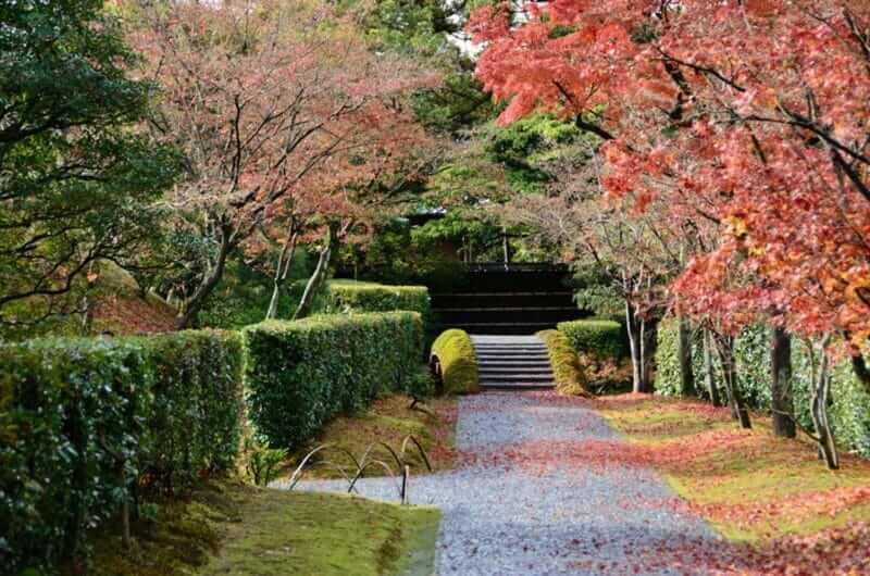 khu vườn ở Katsura Imperial Villa Nhật Bản. lá rụng đỏ. Katsura Rikyu = màn trập