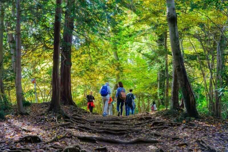 People trekking at Mount Takao (Takao San), Tokyo, Japan = shutterstock