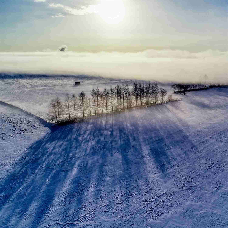 北海道十勝市美麗的森林= Shutterstock 1