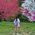 Hanamiyama Park in Fukushima Prefecture = Shutterstock 1