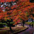 Minami-Tateishi Park with beautiful autumn leaves