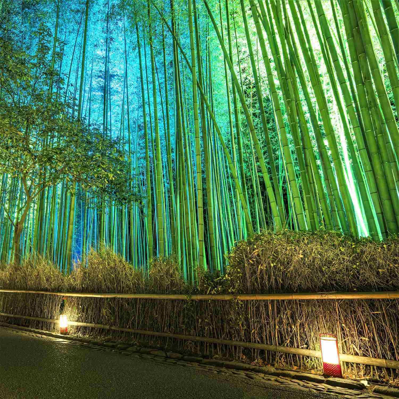 """The fantastic illumination """"Hanatouro"""" in Arashiyama, Kyoto = Shutterstock 1"""