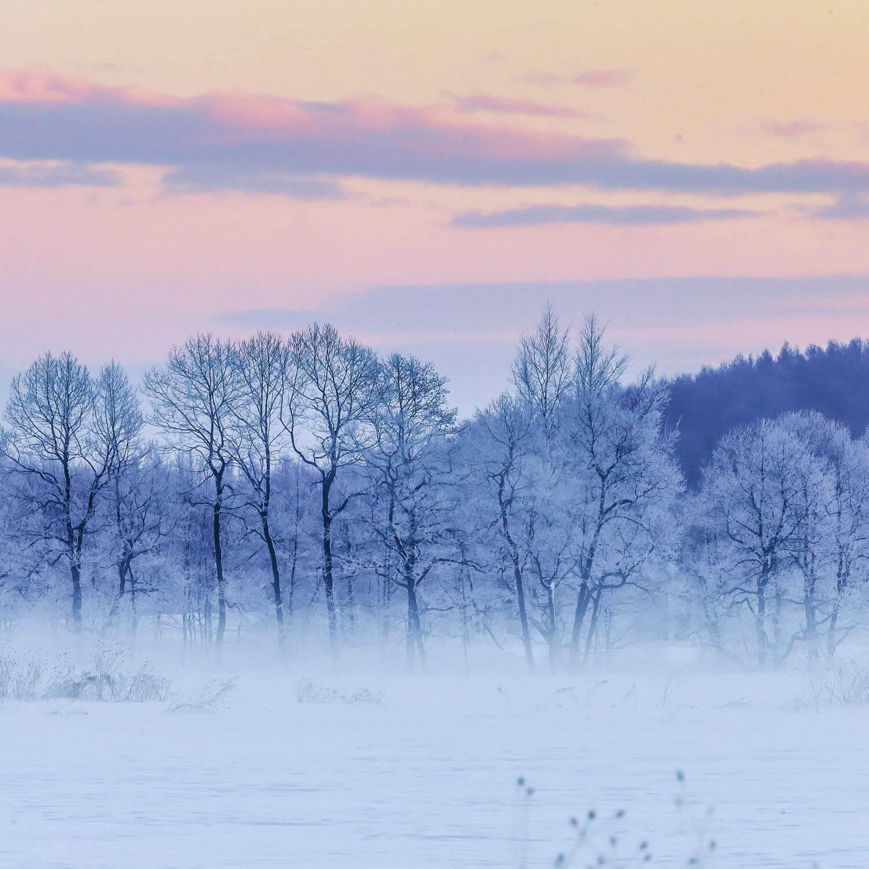 Winter landscape in Hokkaido = AdobeStock 1