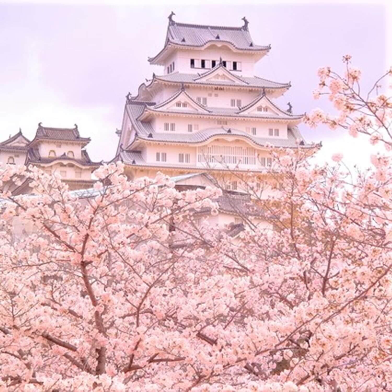 Himeji Castle in Hyogo Prefecture 1