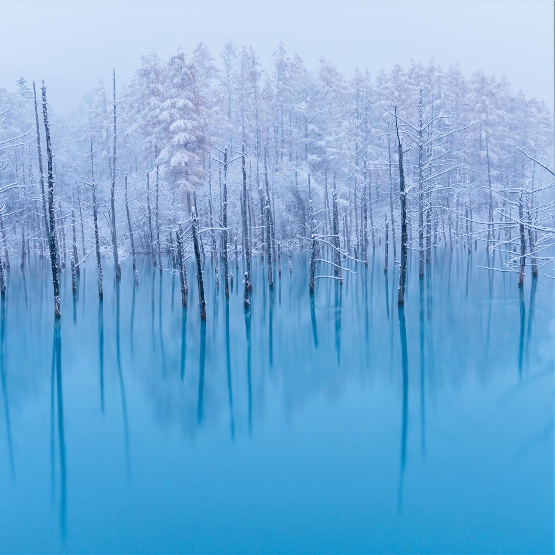 Blue Pond in Biei, Hokkaido = Shutterstock 1