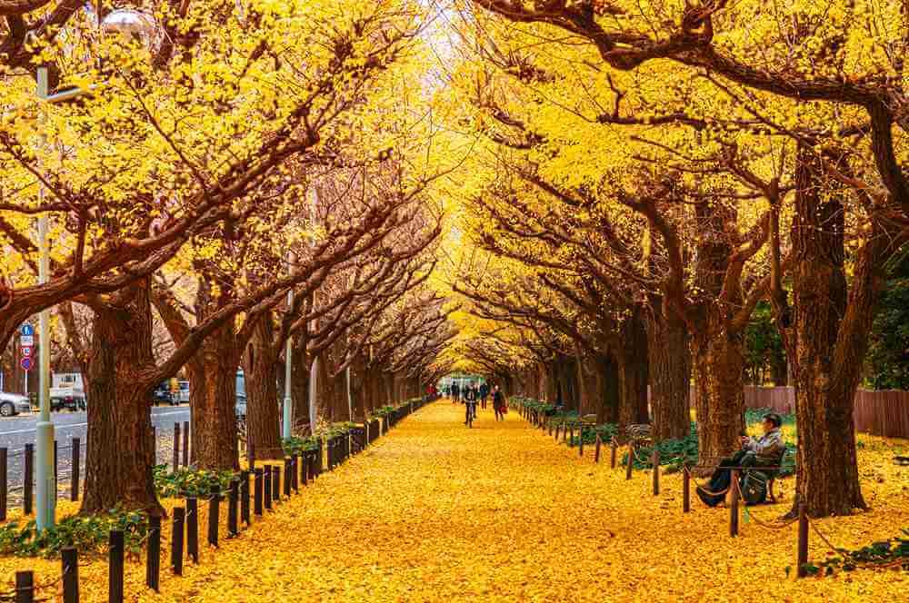 Джингу Гайен в Токио = Shutterstock